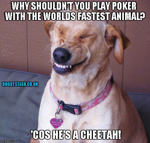 WHY SHOULDN'T YOU PLAY POKER WITH THE WORLDS FASTEST ANIMAL? 'COS HE'S A CHEETAH! | image tagged in laughing dog | made w/ Imgflip meme maker