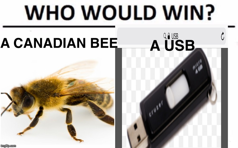 Who Would Win? Meme | A CANADIAN BEE A USB | image tagged in memes,who would win | made w/ Imgflip meme maker