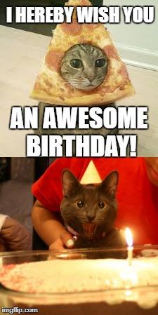 Pizza Cat Birthday Memes Gifs Imgflip