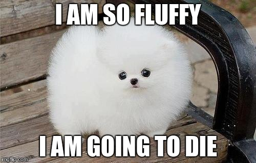 I AM SO FLUFFY I AM GOING TO DIE | image tagged in fluffy dogs | made w/ Imgflip meme maker