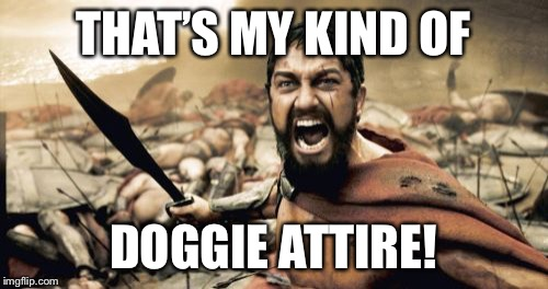 Sparta Leonidas Meme | THAT'S MY KIND OF DOGGIE ATTIRE! | image tagged in memes,sparta leonidas | made w/ Imgflip meme maker