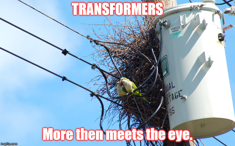 Real Life Transformers | TRANSFORMERS More then meets the eye. | image tagged in transformers,nests,monk parakeets,parakeets | made w/ Imgflip meme maker
