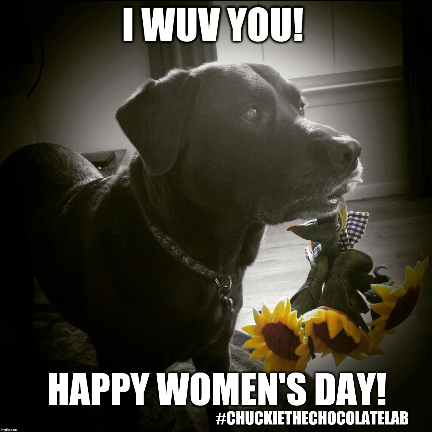 Happy Women's Day!  |  HAPPY WOMEN'S DAY! #CHUCKIETHECHOCOLATELAB | image tagged in chuckie the chocolate lab teamchuckie,happy women's day,women's day,international women's day,dogs,memes | made w/ Imgflip meme maker