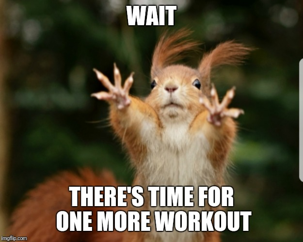 Wait Squirrel | WAIT THERE'S TIME FOR ONE MORE WORKOUT | image tagged in workout,exercise,fitness,animals,squirrel,gym | made w/ Imgflip meme maker