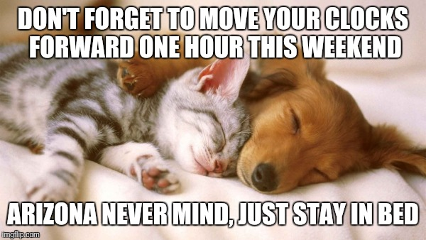 cats and dogs sleeping together | DON'T FORGET TO MOVE YOUR CLOCKS FORWARD ONE HOUR THIS WEEKEND ARIZONA NEVER MIND, JUST STAY IN BED | image tagged in cats and dogs sleeping together | made w/ Imgflip meme maker