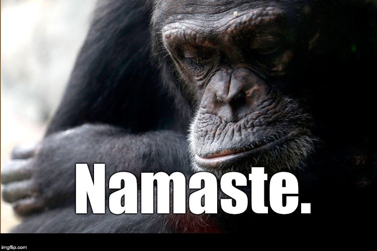 Koko | Namaste. | image tagged in koko | made w/ Imgflip meme maker