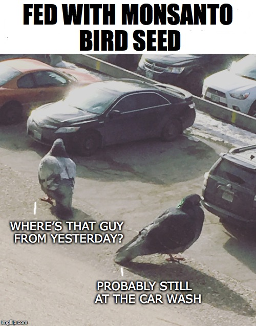 Pigeons From Hell | FED WITH MONSANTO BIRD SEED WHERE'S THAT GUY FROM YESTERDAY? PROBABLY STILL  AT THE CAR WASH | image tagged in pigeons,monsanto,poop | made w/ Imgflip meme maker
