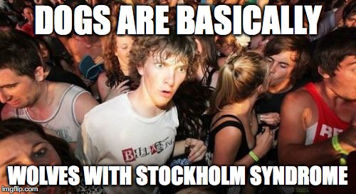 Sudden Clarity Clarence Meme | DOGS ARE BASICALLY WOLVES WITH STOCKHOLM SYNDROME | image tagged in memes,sudden clarity clarence | made w/ Imgflip meme maker