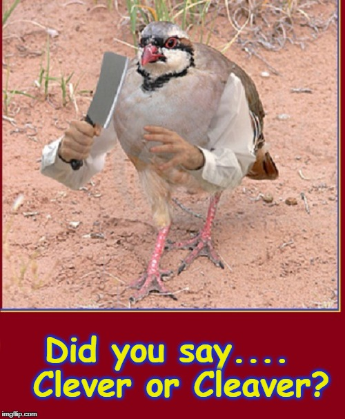 "Arms & Hands Quailman Sez, ""I will not Tolerate Misused Words."" 