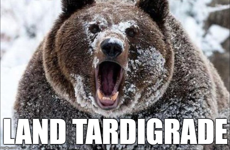 Land Tardigrade | LAND TARDIGRADE | image tagged in bear | made w/ Imgflip meme maker