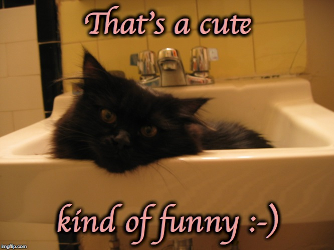 sink kitty 2 | That's a cute kind of funny :-) | image tagged in sink kitty 2 | made w/ Imgflip meme maker