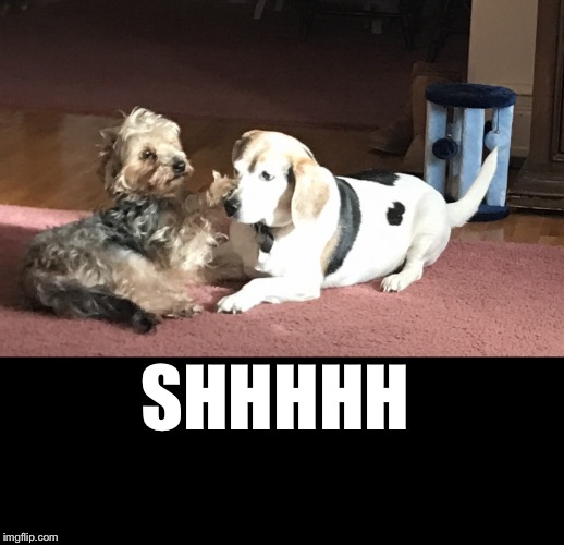 SHHHHH | image tagged in shhhh dog | made w/ Imgflip meme maker