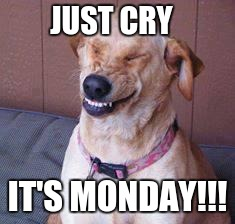 funny dog | JUST CRY IT'S MONDAY!!! | image tagged in funny dog | made w/ Imgflip meme maker