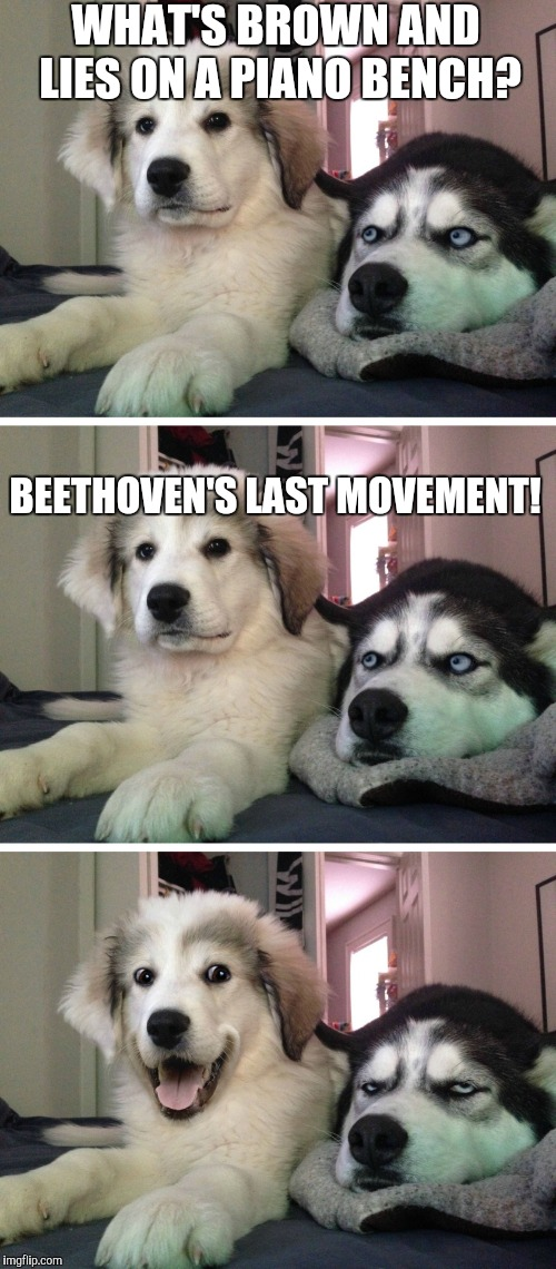 Bad pun dogs | BEETHOVEN'S LAST MOVEMENT! WHAT'S BROWN AND LIES ON A PIANO BENCH? | image tagged in bad pun dogs,music week | made w/ Imgflip meme maker