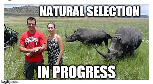 NATURAL SELECTION IN PROGRESS | image tagged in rhino time | made w/ Imgflip meme maker
