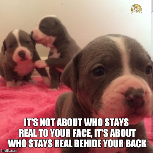 JJbullies | IT'S NOT ABOUT WHO STAYS REAL TO YOUR FACE, IT'S ABOUT WHO STAYS REAL BEHIDE YOUR BACK | image tagged in jjbullies | made w/ Imgflip meme maker