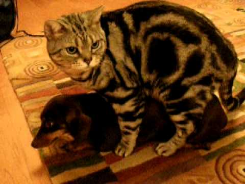 Dogs and cats having sex