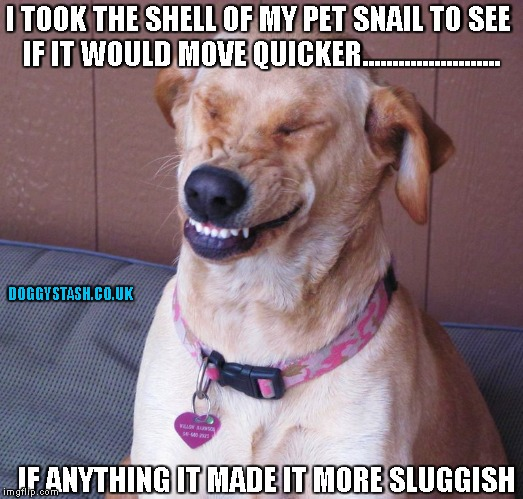 I TOOK THE SHELL OF MY PET SNAIL TO SEE IF IT WOULD MOVE QUICKER....................... IF ANYTHING IT MADE IT MORE SLUGGISH | image tagged in laughing dog | made w/ Imgflip meme maker