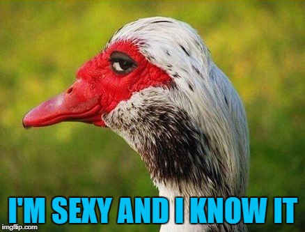 I'm sexy and I know it | I'M SEXY AND I KNOW IT | image tagged in funny bird,i'm sexy and i know it,funny goose | made w/ Imgflip meme maker