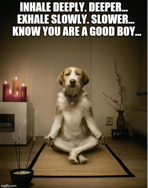 dog meditation funny | INHALE DEEPLY. DEEPER...  EXHALE SLOWLY. SLOWER...    KNOW YOU ARE A GOOD BOY... | image tagged in dog meditation funny | made w/ Imgflip meme maker