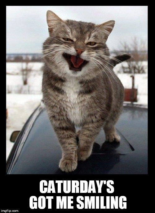 Image result for caturday cats