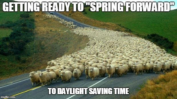 "sheep | GETTING READY TO ""SPRING FORWARD"" TO DAYLIGHT SAVING TIME 