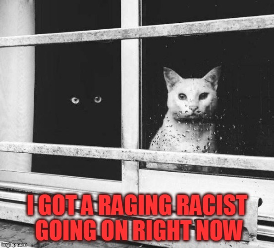 B&W | I GOT A RAGING RACIST GOING ON RIGHT NOW | image tagged in cats,that's racist,nsfw | made w/ Imgflip meme maker