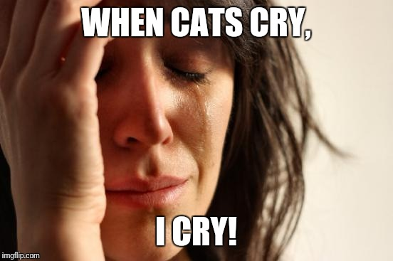 First World Problems Meme | WHEN CATS CRY, I CRY! | image tagged in memes,first world problems | made w/ Imgflip meme maker