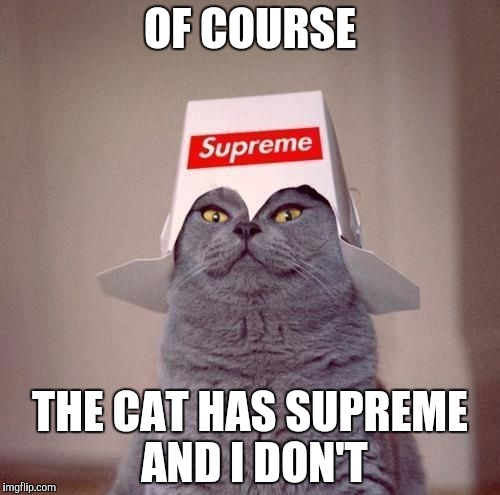 OF COURSE THE CAT HAS SUPREME AND I DON'T | image tagged in the supreme cat | made w/ Imgflip meme maker