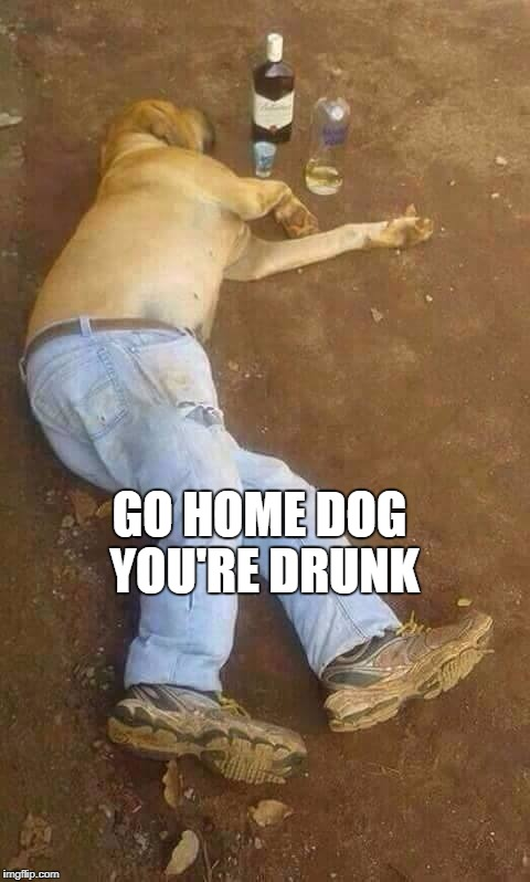 doge drunk | GO HOME DOG YOU'RE DRUNK | image tagged in doge drunk,dogs,drunk | made w/ Imgflip meme maker