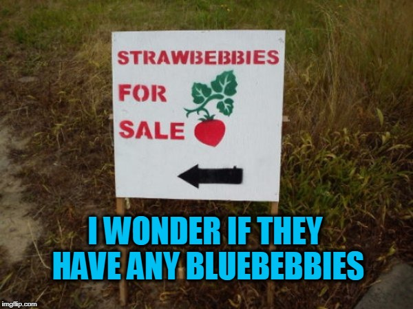 strawbebbies  |  I WONDER IF THEY HAVE ANY BLUEBEBBIES | image tagged in strawberries,spelling | made w/ Imgflip meme maker
