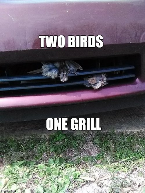 TWO BIRDS ONE GRILL | image tagged in jkool | made w/ Imgflip meme maker