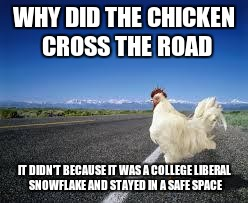 Why the chicken Cross the road | WHY DID THE CHICKEN CROSS THE ROAD IT DIDN'T BECAUSE IT WAS A COLLEGE LIBERAL SNOWFLAKE AND STAYED IN A SAFE SPACE | image tagged in why the chicken cross the road | made w/ Imgflip meme maker