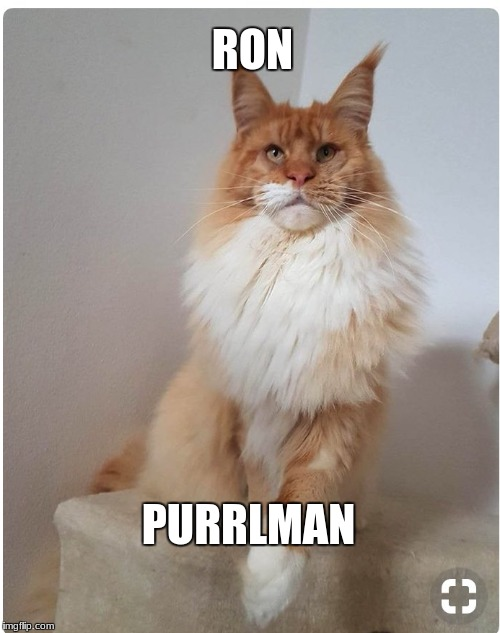 Ron Purrlman | RON PURRLMAN | image tagged in cat | made w/ Imgflip meme maker