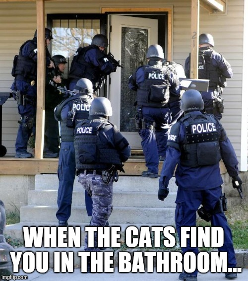 Cat Raid | WHEN THE CATS FIND YOU IN THE BATHROOM... | image tagged in police raid,cats,bathroom,funny cats | made w/ Imgflip meme maker