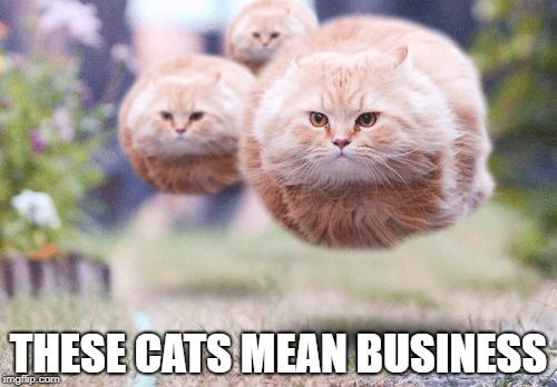 Flying Kitties | THESE CATS MEAN BUSINESS | image tagged in funny memes,cute cat | made w/ Imgflip meme maker