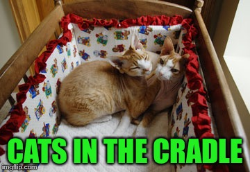 When you coming home, dad? | CATS IN THE CRADLE | image tagged in a phantasmemegoric  thecoffeemaster event,meme,funny,music,cats | made w/ Imgflip meme maker