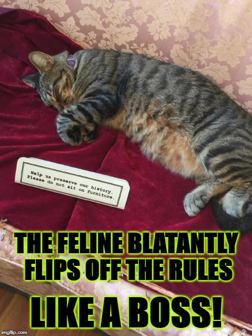 THE FELINE BLATANTLY FLIPS OFF THE RULES LIKE A BOSS! | image tagged in the boss | made w/ Imgflip meme maker