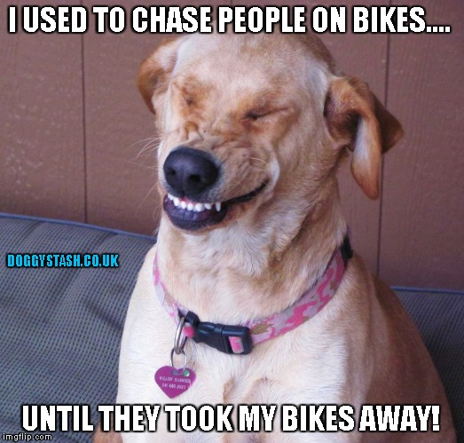 I USED TO CHASE PEOPLE ON BIKES.... UNTIL THEY TOOK MY BIKES AWAY! | image tagged in laughing dog | made w/ Imgflip meme maker