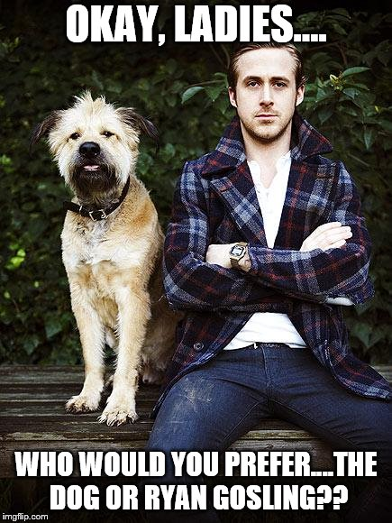 Ryan Gosling dog | OKAY, LADIES.... WHO WOULD YOU PREFER....THE DOG OR RYAN GOSLING?? | image tagged in ryan gosling dog | made w/ Imgflip meme maker
