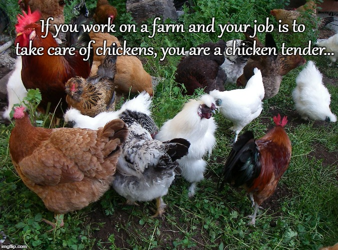 Chicken tender... | If you work on a farm and your job is to take care of chickens, you are a chicken tender... | image tagged in work,farm,chicken,job | made w/ Imgflip meme maker