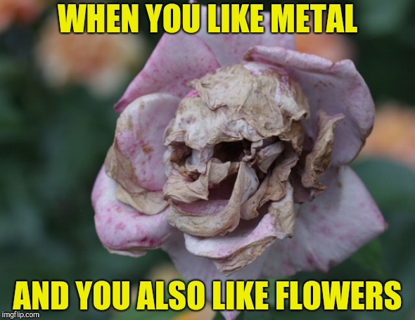 Brought back for Metal Mania Week (March 9-16) A PowerMetalhead & DoctorDoomsday180 event | WHEN YOU LIKE METAL AND YOU ALSO LIKE FLOWERS | image tagged in memes,metal mania week,powermetalhead,flowers,skull,brutal | made w/ Imgflip meme maker