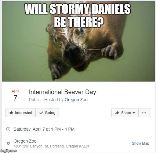 International Beaver Day | WILL STORMY DANIELS BE THERE? | image tagged in stormy daniels,beaver,porn,donald trump,oregon,zoo | made w/ Imgflip meme maker
