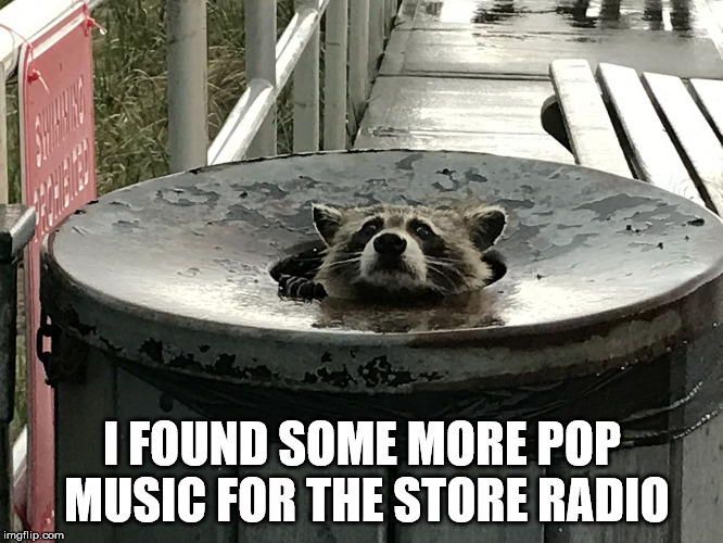 So that's how they choose store music! |  I FOUND SOME MORE POP MUSIC FOR THE STORE RADIO | image tagged in trash panda,pop music,raccoon,store music | made w/ Imgflip meme maker