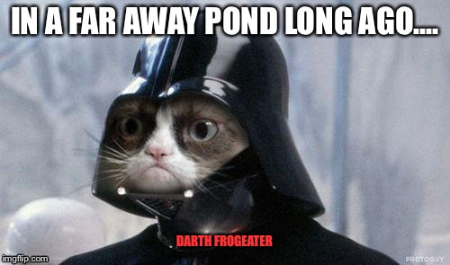 DARTH FROGEATER | made w/ Imgflip meme maker