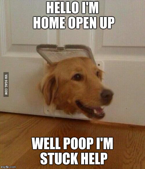 HELLO I'M HOME OPEN UP WELL POOP I'M STUCK HELP | image tagged in jim golden retriever | made w/ Imgflip meme maker