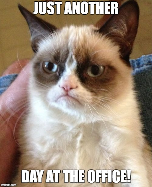 Grumpy Cat Meme | JUST ANOTHER DAY AT THE OFFICE! | image tagged in memes,grumpy cat | made w/ Imgflip meme maker