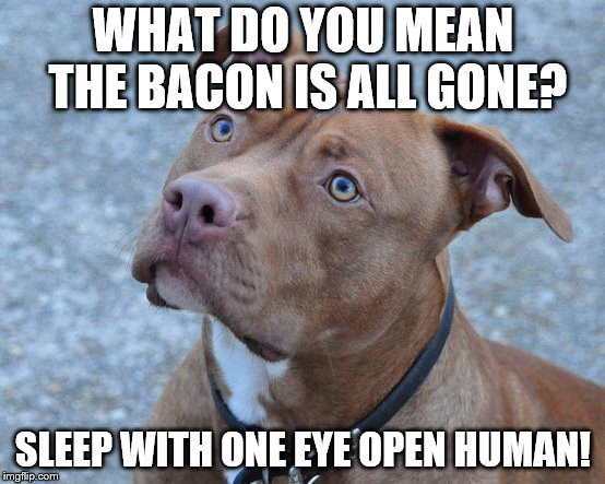 WHAT DO YOU MEAN THE BACON IS ALL GONE? SLEEP WITH ONE EYE OPEN HUMAN! | image tagged in pit,meme | made w/ Imgflip meme maker