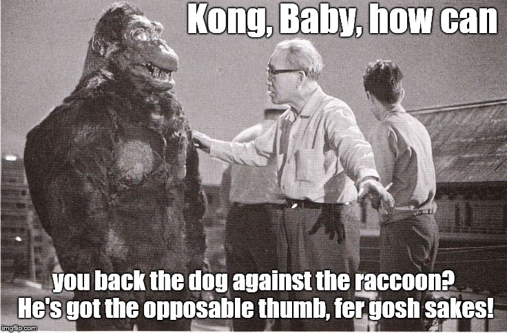Kong with Director | Kong, Baby, how can you back the dog against the raccoon? He's got the opposable thumb, fer gosh sakes! | image tagged in kong with director | made w/ Imgflip meme maker