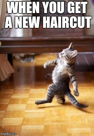 Cool Cat Stroll Meme | WHEN YOU GET A NEW HAIRCUT | image tagged in memes,cool cat stroll | made w/ Imgflip meme maker